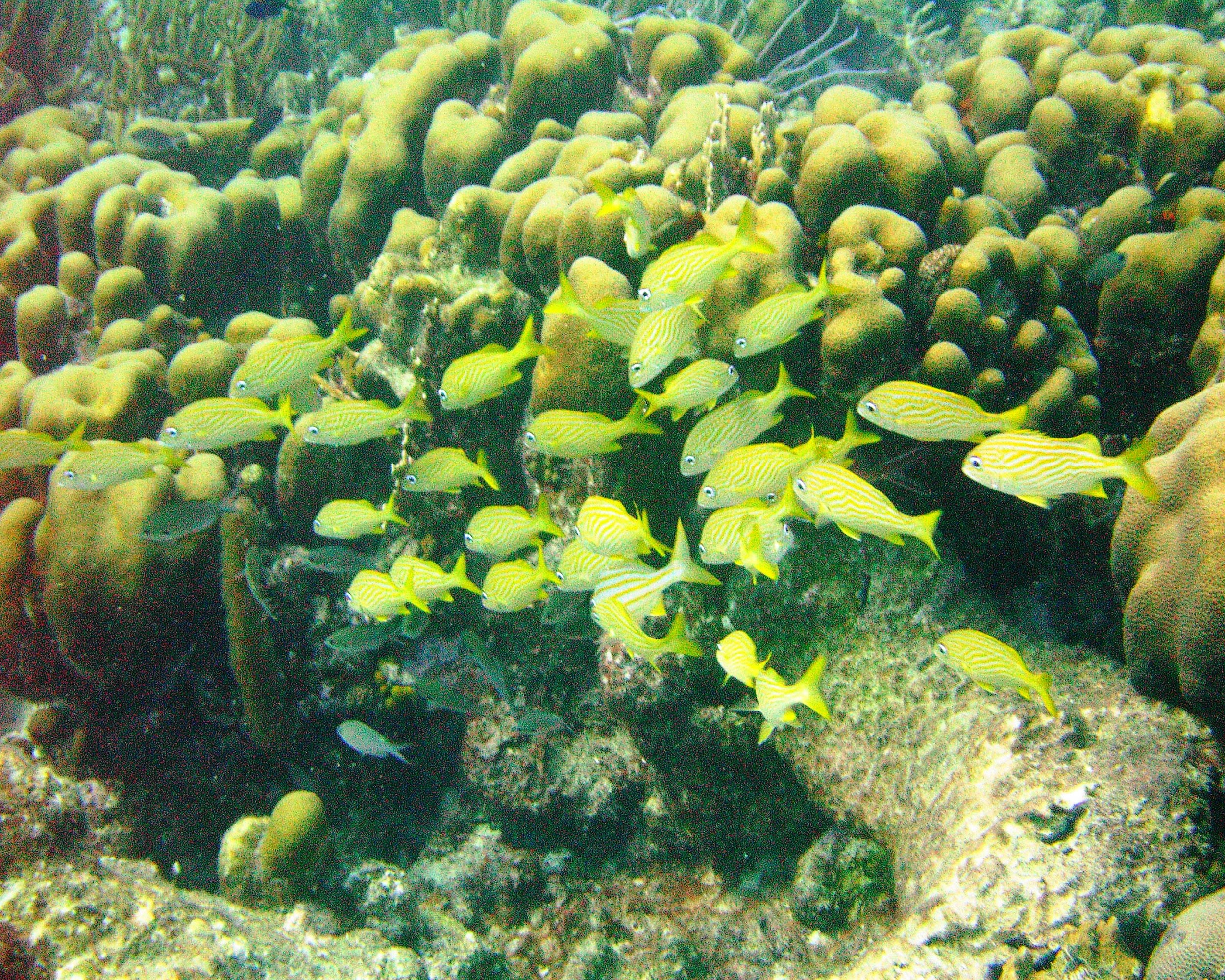 Yellow Fish and Reef